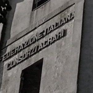 Granary silos, particular